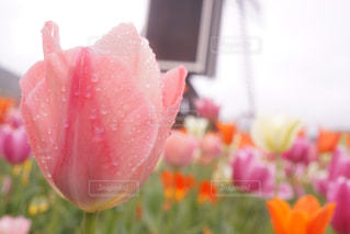 花のクローズアップの写真・画像素材[2182035]