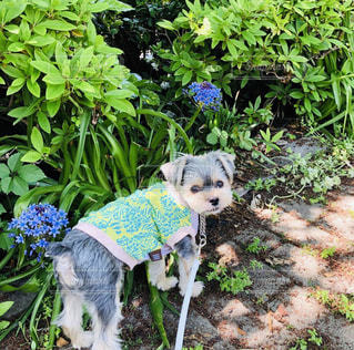 庭の小さな犬の写真・画像素材[2094278]