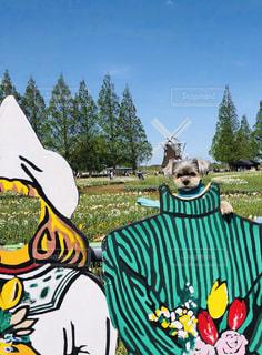 顔出しパネルと犬の写真・画像素材[2094287]