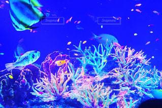 カラフル熱帯魚の写真・画像素材[2094307]
