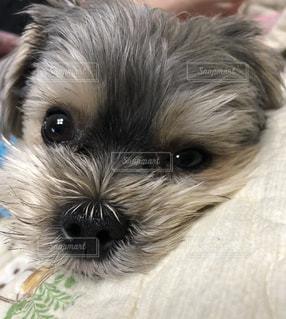 うるうる犬の写真・画像素材[2094311]