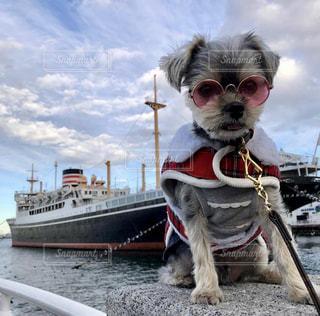 客船と犬の写真・画像素材[2094313]