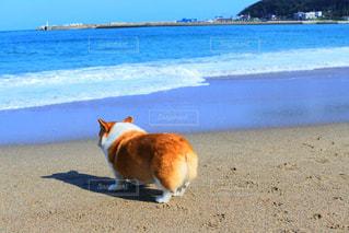 浜辺に立っている犬の写真・画像素材[2094322]