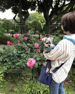 薔薇と小型犬の写真・画像素材[2738744]