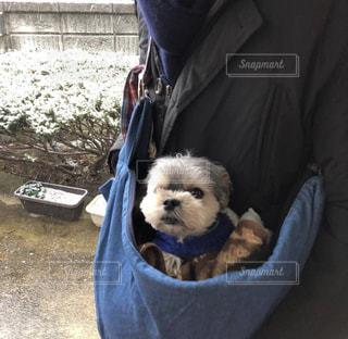 犬を抱いている人の写真・画像素材[2738753]