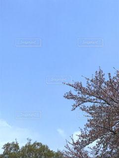 醍醐寺からの空の写真・画像素材[1124833]