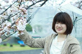桜の写真・画像素材[664874]