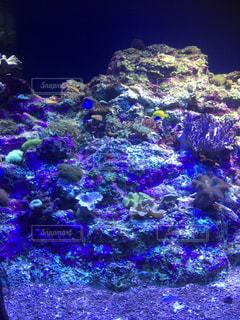 サンゴの水中ビューの写真・画像素材[768923]