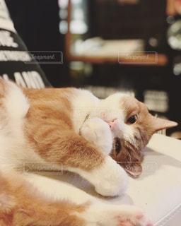 猫,リビング,ねこ,ソファ,まったり,ゴロゴロ,お部屋でのんびり