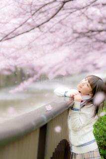 桜を見ている女子高生の写真・画像素材[858004]