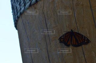 夏,海外,虫取り,虫,蝶々,Canada,Travel,Ontario