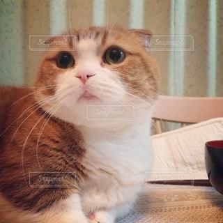 猫の写真・画像素材[11458]