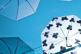 傘アート 蝶々 フィルム調の写真・画像素材[1234179]