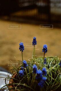 春の写真・画像素材[699849]