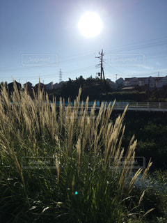 背の高い草のフィールドの写真・画像素材[1488821]