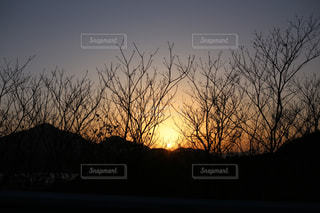 背景の夕日とツリーの写真・画像素材[1288699]