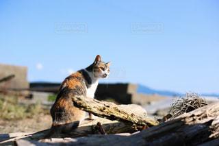 棚の上に座って猫の写真・画像素材[1288730]