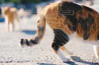 近くに猫のアップの写真・画像素材[1288741]