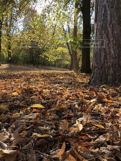 森の中の木の杭の写真・画像素材[1624713]