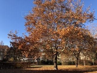 ドイツの紅葉の写真・画像素材[1628408]