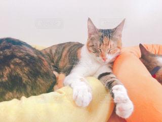 ベッドの上で横になっている猫の写真・画像素材[1621902]