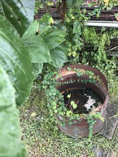 近くの植物のアップ  自然の写真・画像素材[727987]
