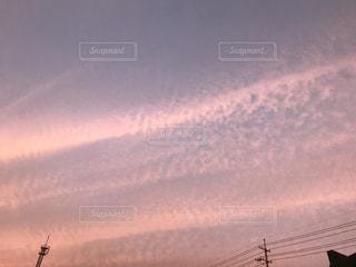 薄いピンクの写真・画像素材[848644]