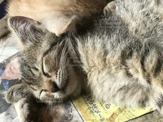 地面に横になっている猫の写真・画像素材[902282]