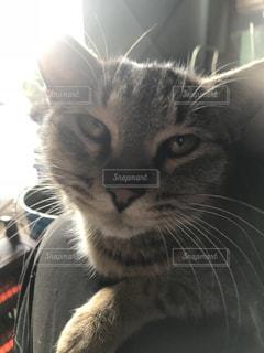 近くに猫のアップの写真・画像素材[990931]