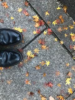道端に紅葉の季節がの写真・画像素材[1080839]