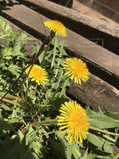 黄色の花の写真・画像素材[1144723]