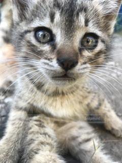 近くに猫のアップの写真・画像素材[1254804]