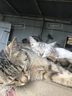 地面に横になっている猫の写真・画像素材[1273754]