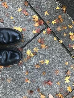 紅葉,屋外,晴れ,曇り,落ち葉,地面,皮靴