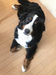 タイル張りの床の上に座って犬の写真・画像素材[1207612]