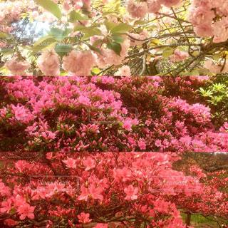 躑躅ヶ丘公園の写真・画像素材[1128179]