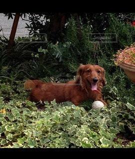 犬の写真・画像素材[19033]