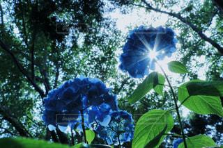 花の写真・画像素材[539957]