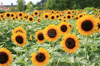 花の写真・画像素材[597772]