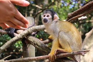 猿の写真・画像素材[673371]