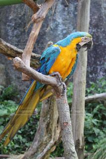 鳥の写真・画像素材[673378]