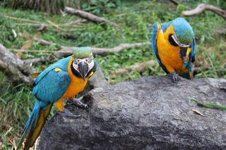 鳥の写真・画像素材[673380]