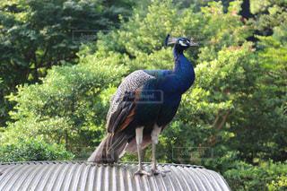 鳥の写真・画像素材[673386]