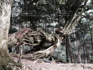 木の写真・画像素材[676126]
