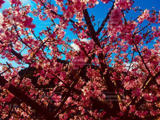 木の花の花瓶の写真・画像素材[1021905]
