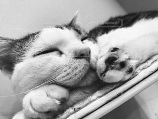 近くに猫のアップの写真・画像素材[814254]
