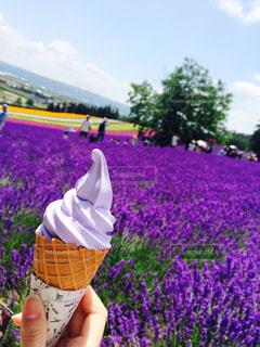紫色の花を身に着けている人の写真・画像素材[1195284]