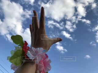 近くの花のアップの写真・画像素材[715491]