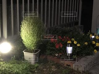 お気に入りのガーデン用品と庭の写真・画像素材[727098]