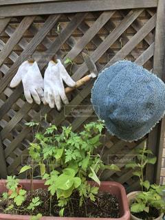 庭の草取り終わった!😀の写真・画像素材[727128]